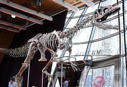 Dinozor iskeletine 2,36 milyon dolar