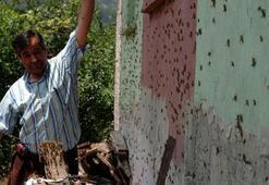 Köyler çekgirge istilası altında