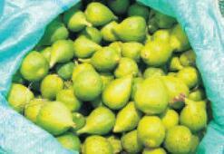 Erkek incirler, semt pazarında yerini aldı