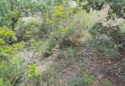 Kastamonuda ormanlık alanda suçüstü yakalandılar