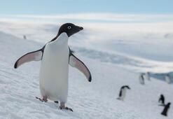 Küresel ısınma Antarktikayı tehdit ediyor