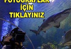 Türkiye'nin ilk dev akvaryumu Turkuazoo açıldı