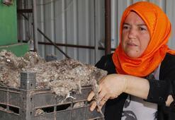İki engelli çocuk annesi girişimci kadını pamuk batırdı