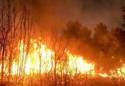 Muğlada korkutan orman yangını