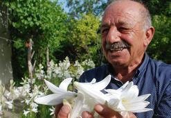 Çiçeğinin kilosu 120 lira, yağı 5 bin euro