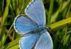Kelebeğin mucizevi evrimi