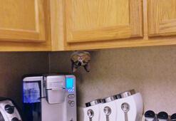 Ninjalara taş çıkaran komik kediler