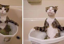 Kediler suyu sevmez tezini çürüten sevimli kediler
