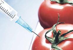 Balık geninden domates üretildi