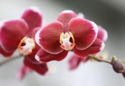 En ilginç 8 orkide türü
