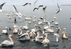 52 bin 803 su kuşumuz var