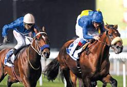 Türk atı 5 milyon  dolar için koşacak