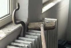 Yılan paniği okulu boşalttırdı