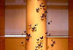 Evde uçuşan kelebek sürüleri