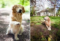 Kör doğan köpek insanlara umut oldu