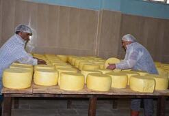 2 milyon liraya mal oldu 8 ton süt işleniyor...
