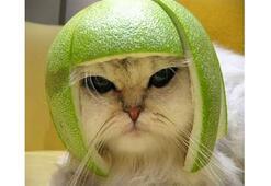 İntihar bombacısı kedi