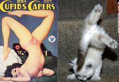 Pin up kızları gibi komik kediler