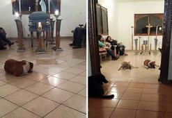 Beslediği köpekler cenazesine geldi