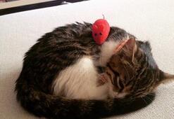 Kedilerden öğrendiğimiz güzellik önerileri