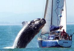 Genç balina tekneye çarpıp kaçtı