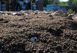 Binlerce arı katledildi