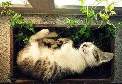 Kendini çiçek zanneden kediler