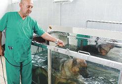 Köpekler için fizyoterapi merkezi