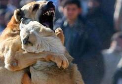 Facebookta köpek dövüşü fotoğrafı paylaşınca
