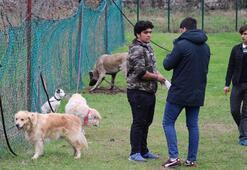 Samsunda kanseri koklayarak teşhis edecek köpekler yetiştirilecek