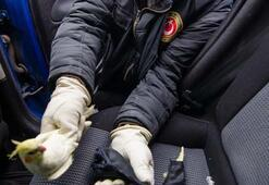 Sınırda 110 evcil hayvan yurda kaçak sokulurken yakalandı