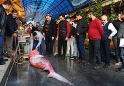 Mersinde 4 metrelik köpek balığı yakalandı