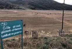 Göle girmek yasaktır yazıyor, ancak inekler otluyor