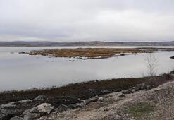 Ladik Gölünün yüzen adacıkları tehlikede