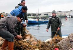 Balıkçılar ağlarına takılanları görünce isyan etti