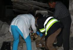 Adıyamanda meydana gelen depremde enkaz altında kalan köpek 16 saat sonra çıkarıldı