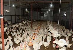Üç tavukla başladı üç bin tavukluk çiftlik kurdu