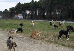 Bakanlıktan sahipsiz köpek operasyonu
