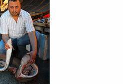 Mersinde 2,5 metrelik camgöz köpek balığı yakalandı