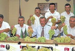 Kuru üzümde rekolte tahmini 220 bin ton