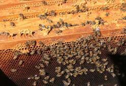 2 bin 500 rakımdaki yaylada organik bal üretimi