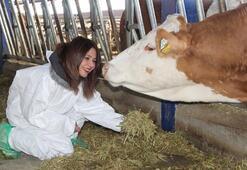 Mühendisliği bıraktı, süt çiftliği kurdu