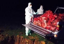 Gebzede 10 bin tavuk gece yarısı itlaf edildi
