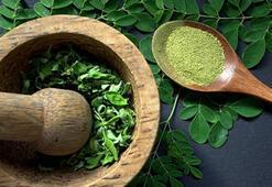Moringa çayı nedir, zararları nelerdir