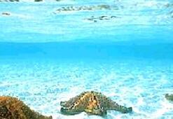 Rengarek, doğayla iç içe bir tatilin adresi; Kalkan