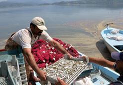 Denize kıyısı olmayan ilçeden Avrupaya 300 ton balık ihracı