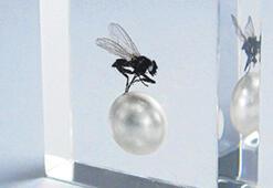 Kağıt küpe, sinek kolye