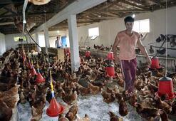 Hobi amacıyla başladılar tavuk çiftliği kurdular