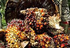 Palmiye yağı nedir, hangi ürünlerin içerisinde bulunuyor