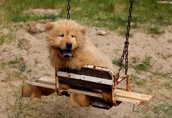 Kapıkulede yakalanan yavru köpekler ihaleyle satıldı